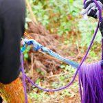 登山におけるロープの役割と基本的な使い方 – 登山の教科書