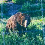 熊に出くわしてしまったら・・・ – 山の相談小屋